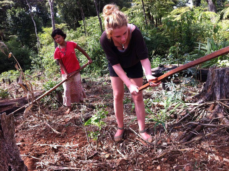 Bei der Feldarbeit muss die verwöhnte Sina (r.) hart anpacken ... - Bildquelle: kabel eins