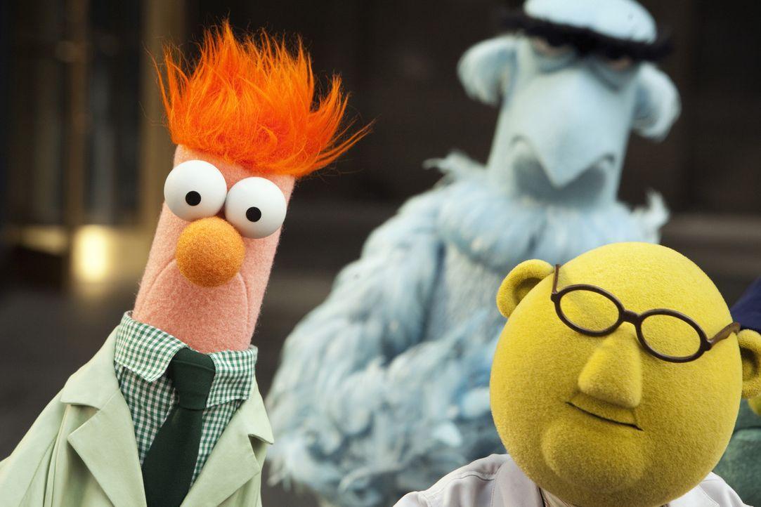 Mit Leib und Seele versuchen Beaker (l.), Sam the Eagle (hinten) und Dr. Bunsen Honeydew (r.) die Muppets-Show zurück ins Leben zu rufen. Mit Erfolg? - Bildquelle: The Muppets Studio, LLC. All rights reserved