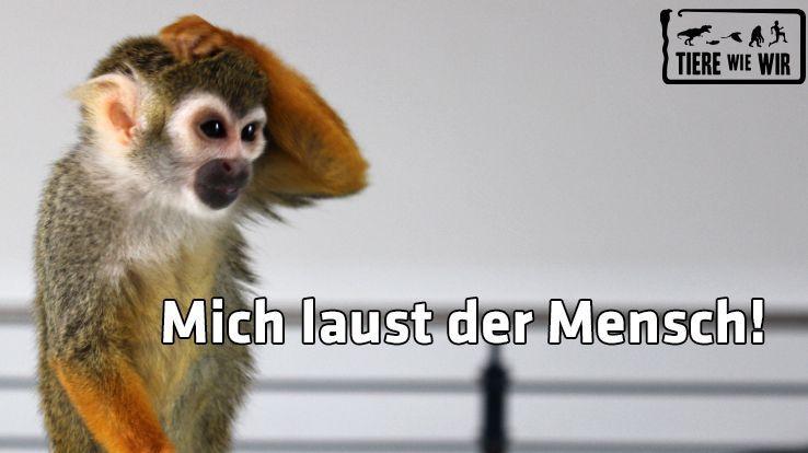TWW-Tiermeme-AffeMensch