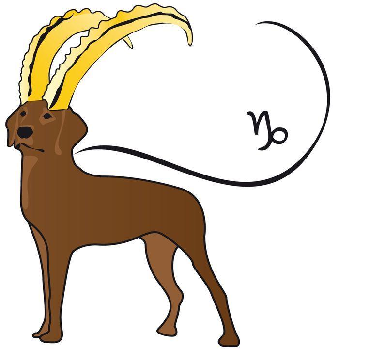 Steinbockhund Kopie