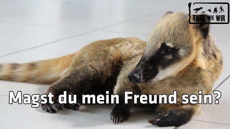 TWW-Tiermeme-Freund