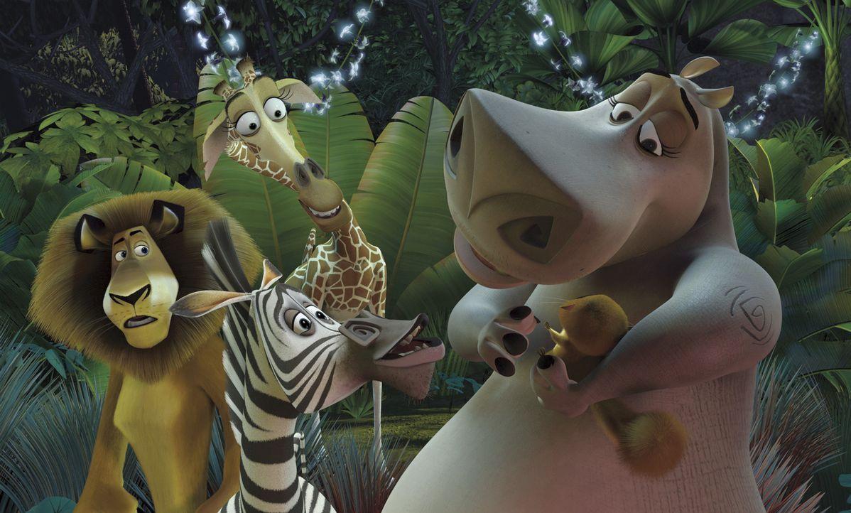 Alex, Marty, Melman und Gloria werden als Schiffbrüchige an die Küste der exotischen Insel Madagascar gespült. Nun müssen die Großstadttiere he... - Bildquelle: TM &   2004 DREAMWORKS ANIMATION SKG.