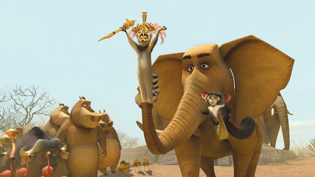 Löwe Alex, Zebra Marty, Nilpferd Glora und Giraffe Melman entschließen sich Madagascar zu verlassen und in ihren Zoo zurückzukehren. Doch sie lan... - Bildquelle: (2008) DREAMWORKS ANIMATION LLC. ALL RIGHTS RESERVED.