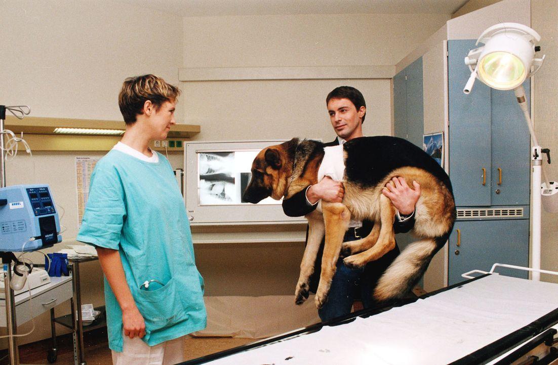 Bei einem nächtlichen Schießduell ist Rex verletzt worden. Kommissar Brandtner (Gedeon Burkhard, r.) bringt seinen Partner zur Tierärztin (Johanna W... - Bildquelle: Ali Schafler Sat.1