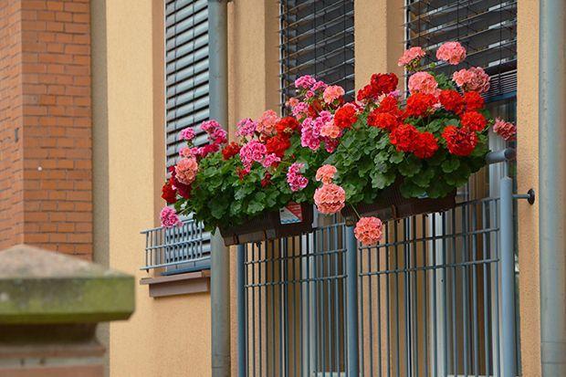 160513_Sommerpflanze_Bildergalerie_b4_Pixabay - Bildquelle: Pixabay