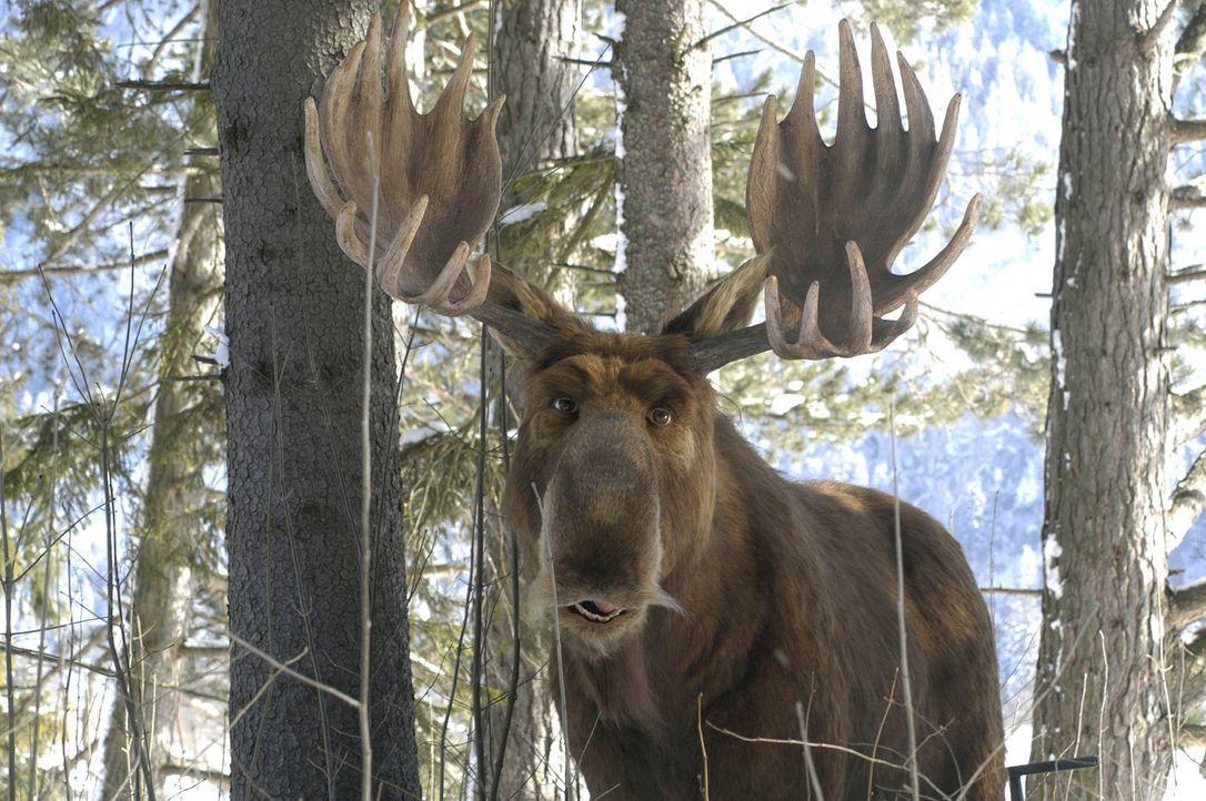 Es ist ein Elch entsprungen: Mr. Moose ... - Bildquelle: Buena Vista International Television