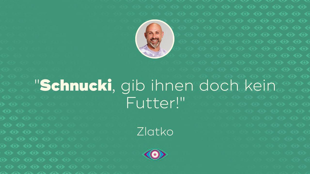 Tag 3: Zlatko Futter - Bildquelle: SAT.1/Willi Weber