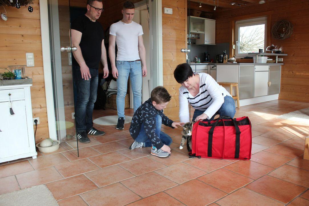 Familie Dickel möchte eine eigene Katzenzucht starten. Doch wird dies mit ihren Norwegischen Waldkatzen-Kitten auch wirklich klappen? - Bildquelle: SAT.1