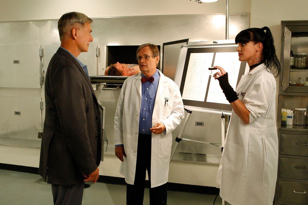 Die Ermittlungen laufen auf Hochtouren: Abby (Pauley Perrette, r.), Ducky (David McCallum, M.) und Gibbs (Mark Harmon, l.) ... - Bildquelle: CBS Television
