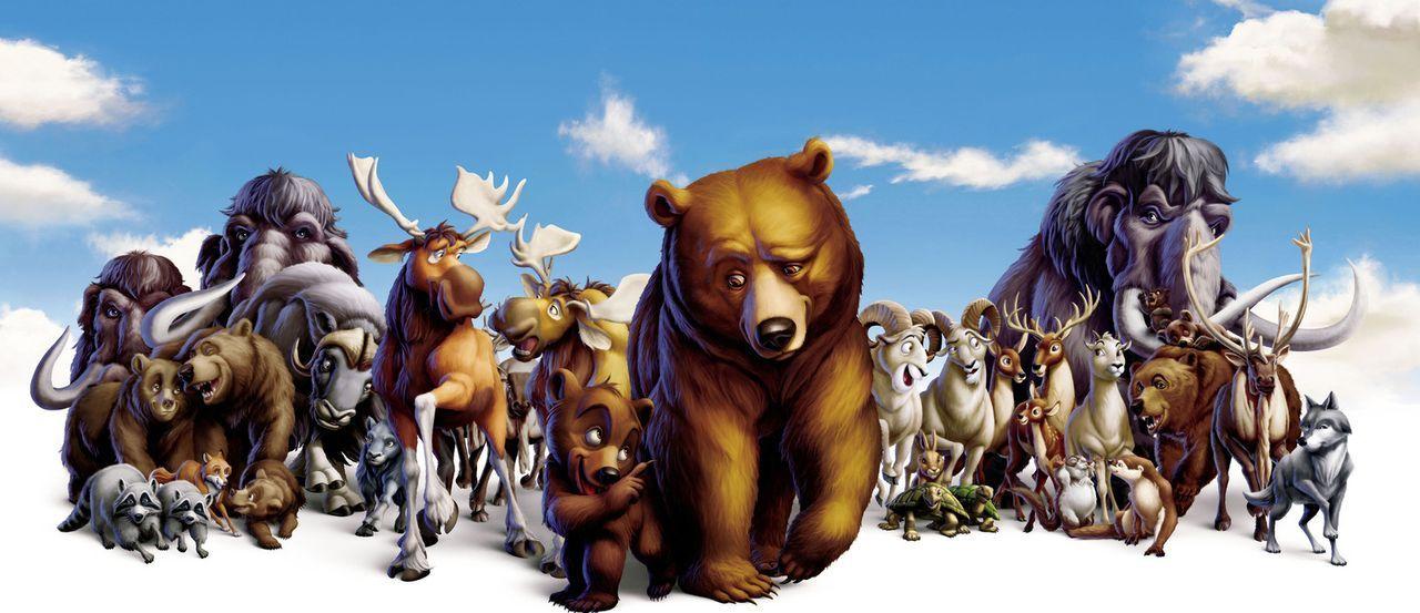 Zwischen dem Bär Kenai (vorne r.) und dem kleinen Grizzly Koda (vorne l.) entwickelt sich eine tiefe Freundschaft. - Bildquelle: Buena Vista Pictures Distribution. All Rights Reserved.