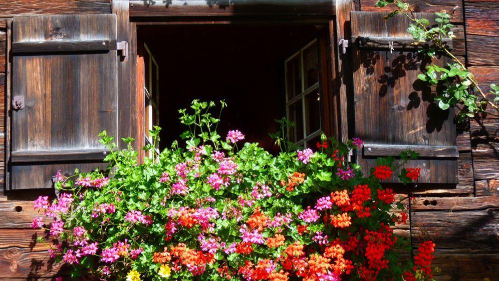 Balkonkästen Gestalten: Verzieren Und Bepflanzen