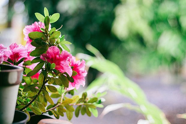 160513_Sommerpflanze_Bildergalerie_b1_Pixabay - Bildquelle: Pixabay