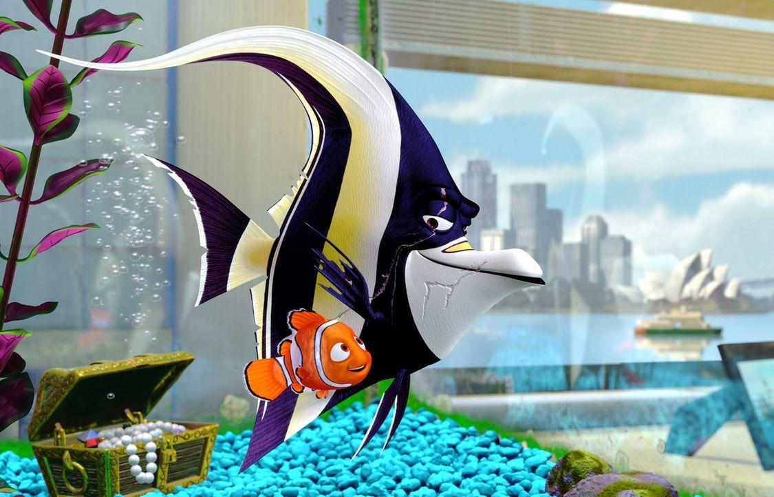 Im Aquarium einer Zahnarztpraxis in Sydney: Gemeinsam mit der Aquarium-Gang um Halterfisch Kahn (r.) plant Nemo (l.) einen Ausbruchversuch nach dem... - Bildquelle: Walt Disney Pictures