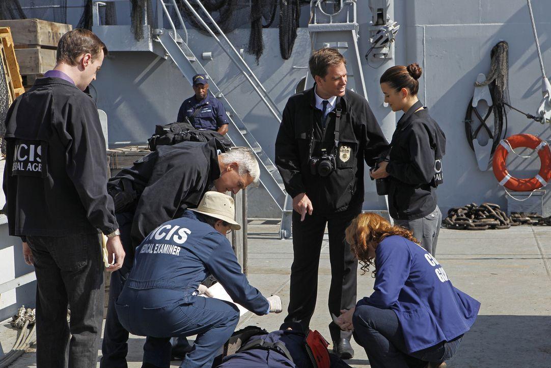 Bei den Ermittlungen in einem neuen Fall: McGee (Sean Murray, l.), Gibbs (Mark Harmon, 2.v.l.), Ducky (David McCallum, 3.v.l.), Tony (Michael Weathe... - Bildquelle: CBS Television