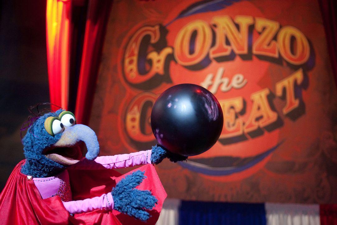 Gonzos Auftritt während der Spendengala geht völlig nach hinten los. Ob die Muppet-Studios trotzdem gerettet werden können? - Bildquelle: The Muppets Studio, LLC. All rights reserved