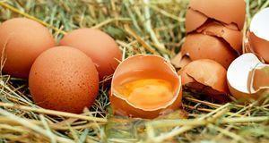Eier sind natürlich die wichtigste Zutat beim Eierlikör. Sie sollten möglichs...