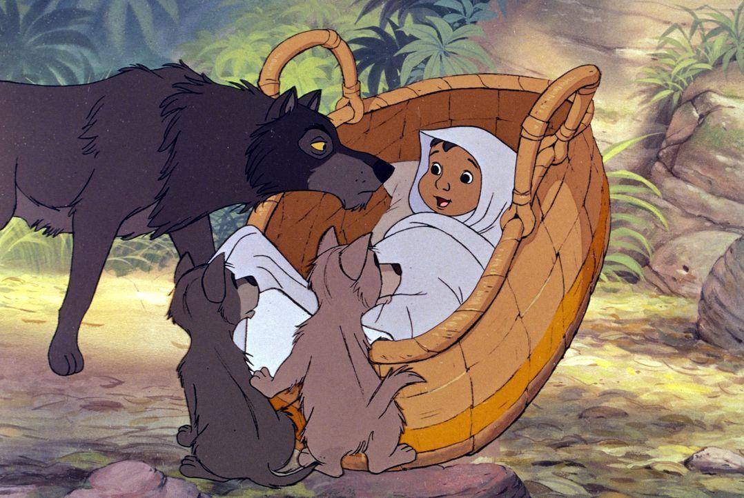 Der kleine Menschenjunge Mogli wird im Dschungel gefunden. Eine Wolfsfamilie nimmt ihn bei sich auf ... - Bildquelle: Disney Enterprises, Inc.  All rights reserved