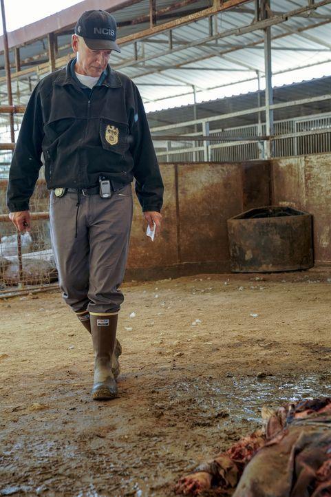 Leroy Jethro Gibbs (Mark Harmon) - Bildquelle: Greg Gayne 2019 CBS Broadcasting, Inc. All Rights Reserved. / Greg Gayne