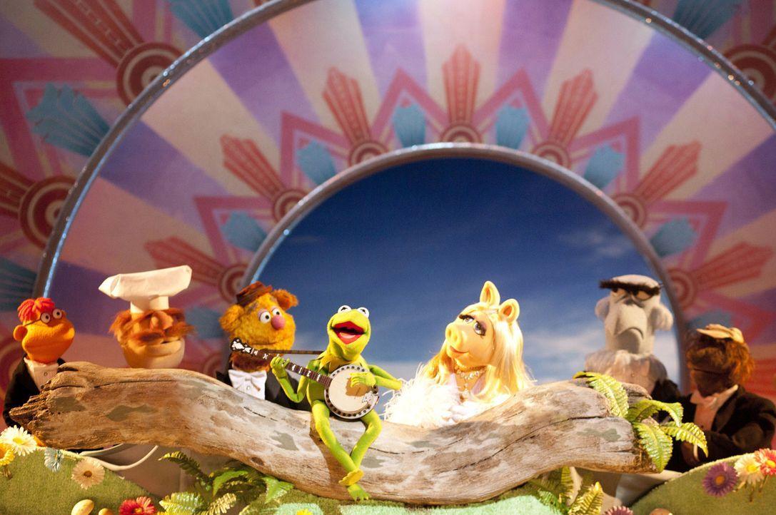 In einem neuen Abenteuer versuchen die Muppets das Comeback des Jahres auf die Beine zu stellen. Doch das Ganze ist viel schwieriger als gedacht ... - Bildquelle: The Muppets Studio, LLC. All rights reserved