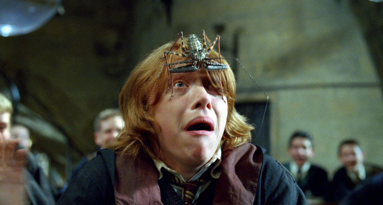 In ihrem vierten Jahr in der Zauberschule werden Harry und seine Freunde (Rupert Grint) Zeugen eines historischen Ereignisses: In Hogwarts findet da... - Bildquelle: 2005 Warner Bros. Ent. Harry Potter Publishing Rights. J.K.R.