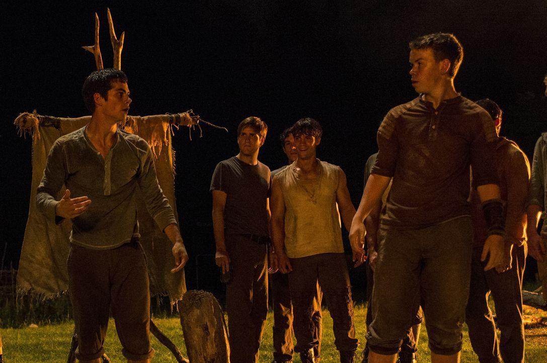 Um bei den Jungs aufgenommen zu werden, auf die Thomas (Dylan O'Brien, l.) im Mittelpunkt eines Labyrinths trifft, muss er gegen den misstrauischen... - Bildquelle: 2014 Twentieth Century Fox Film Corporation. All rights reserved.