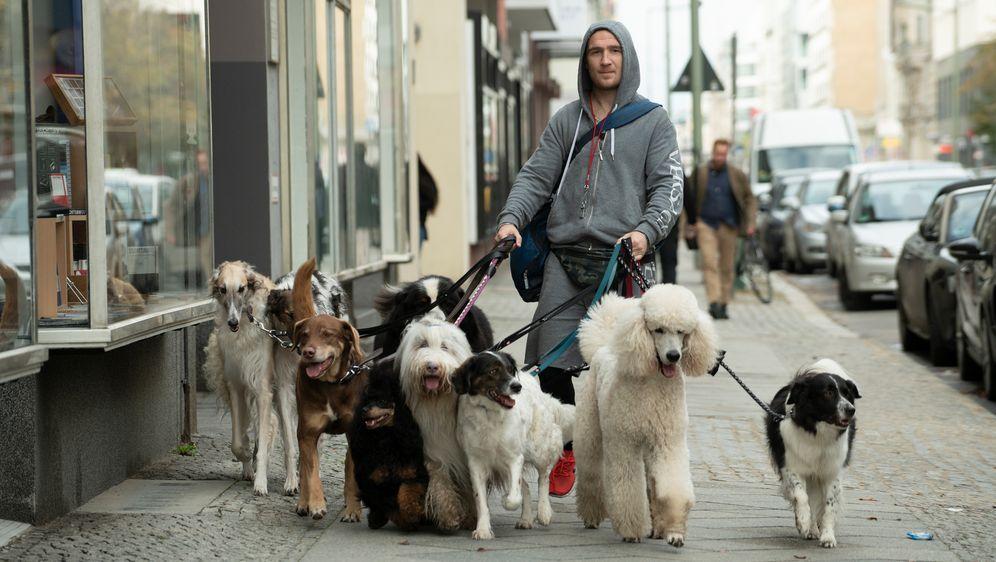 Wuff - Folge dem Hund - Bildquelle: DCM_OliverVaccaro