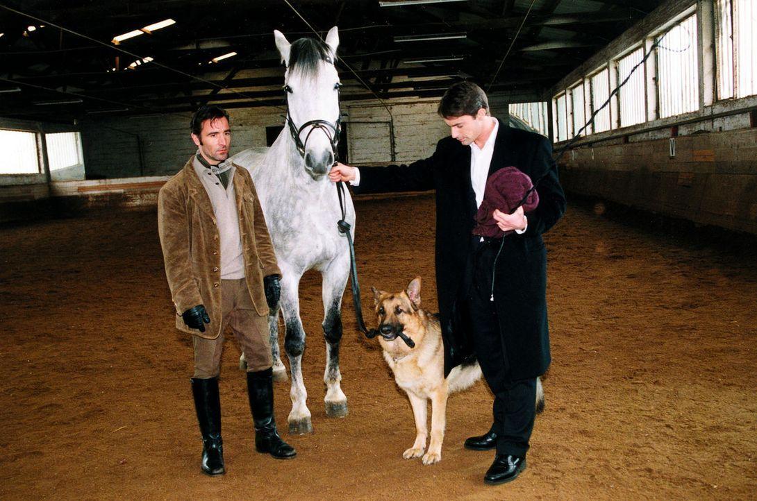 Kommissar Brandtner (Gedeon Burkhard, r.) kann mit seinem vierbeinigen Partner mehr als zufrieden sein: Auch mit Pferden kennt sich Rex bestens aus... - Bildquelle: Sat.1