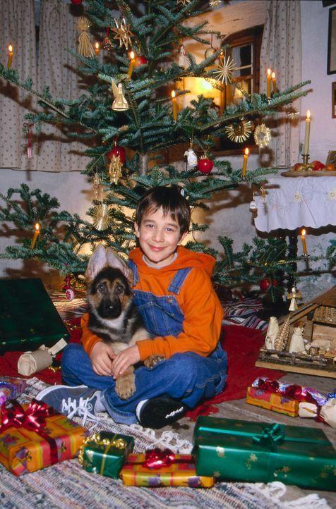 Benny Nachmann (Raphael Ghobadloo) und Rex feiern ihr erstes gemeinsames Weihnachten. - Bildquelle: SAT.1