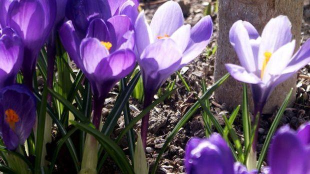 Frühlingserwachen im Garten – mit Hasi in der Mitte gleich noch schöner. Möch...