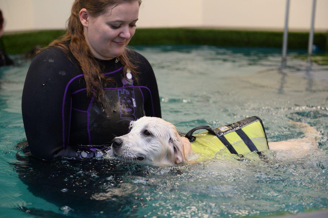 Wlpenschwimmen: Im beheizten Pool, gesichert mit einer Schwimmweste, versuchen kleine Hundewelpen ihre ersten Schwimmversuche ... - Bildquelle: Willi Weber SAT.1