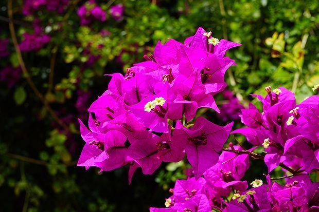 160513_Sommerpflanze_Bildergalerie_b2_Pixabay - Bildquelle: Pixabay