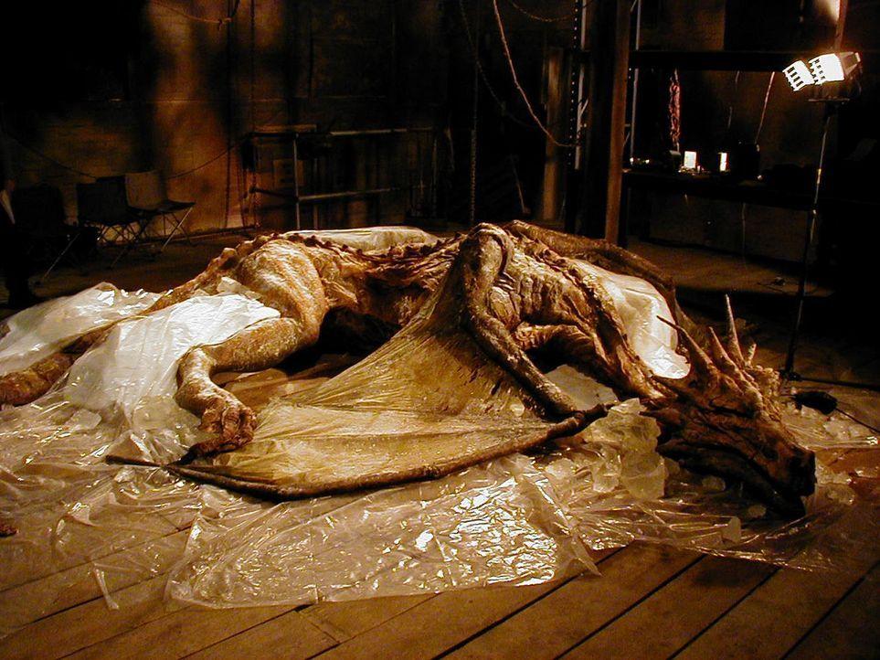 Als in Rumänien Reste eines Drachens gefunden werden, beginnt für die Paläontologen eine spannende Reise in vergangene Zeiten ...