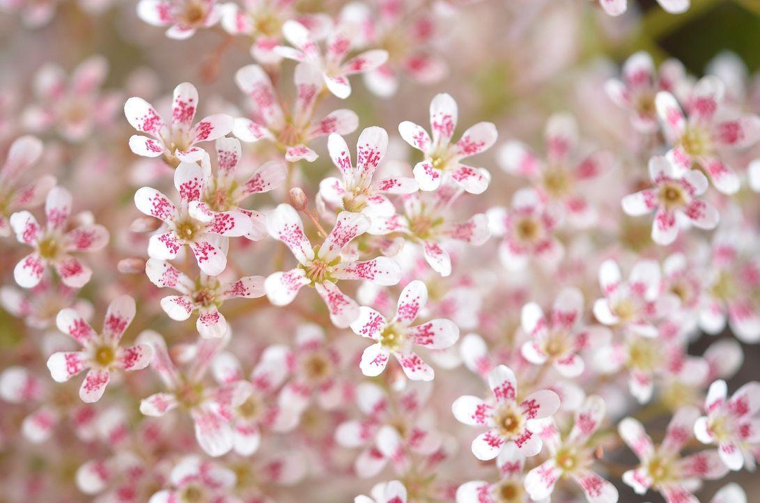 Blume - Bildquelle: Pixabay
