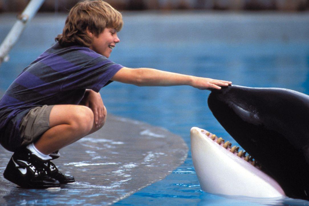 Der 12-jährige Ausreißer Jesse (Jason James Richter) freundet sich in einem Vergnügungspark mit einem Killerwal an ... - Bildquelle: Warner Bros.