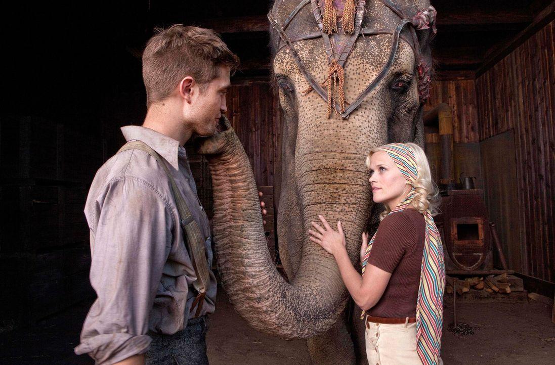 Wasser für die Elefanten - Bildquelle: 2011 Twentieth Century Fox Film Corporation. All rights reserved.