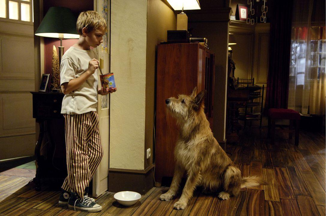 Nach dem plötzlichen Tod seiner Mutter, gibt es für den 12-jährigen Max (Manuel Steitz, l.) nur einen Trost: seinen Hund Bello ... - Bildquelle: Constantin Film Verleih GmbH