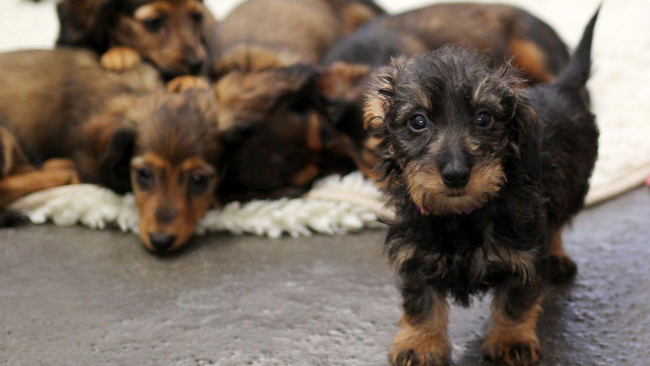 HundeWelpe3 - Bildquelle: dpa