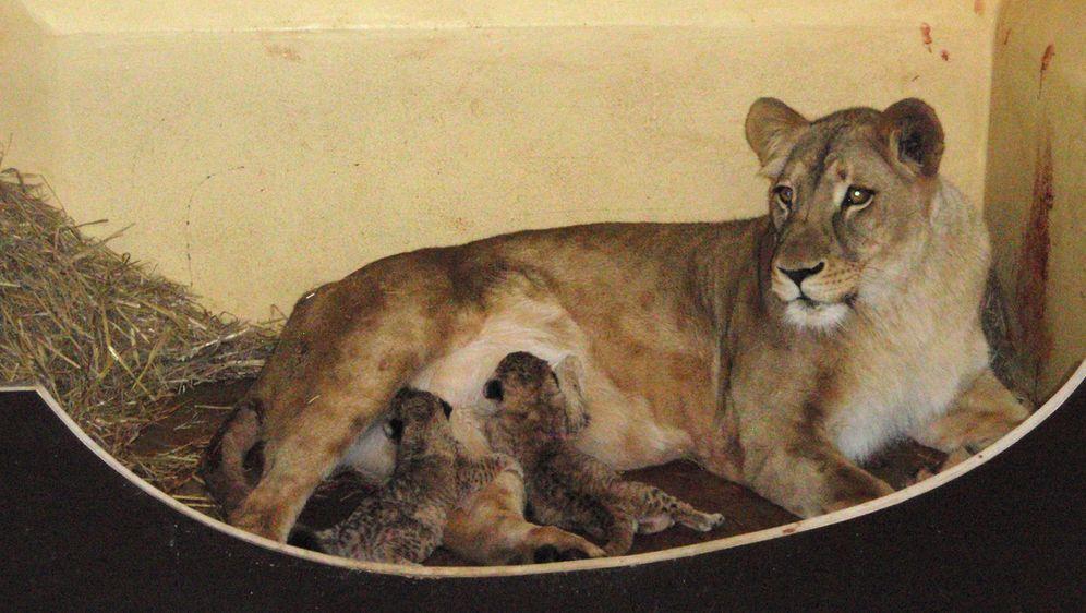 - Bildquelle: (c) Thüringer Zoopark Erfurt