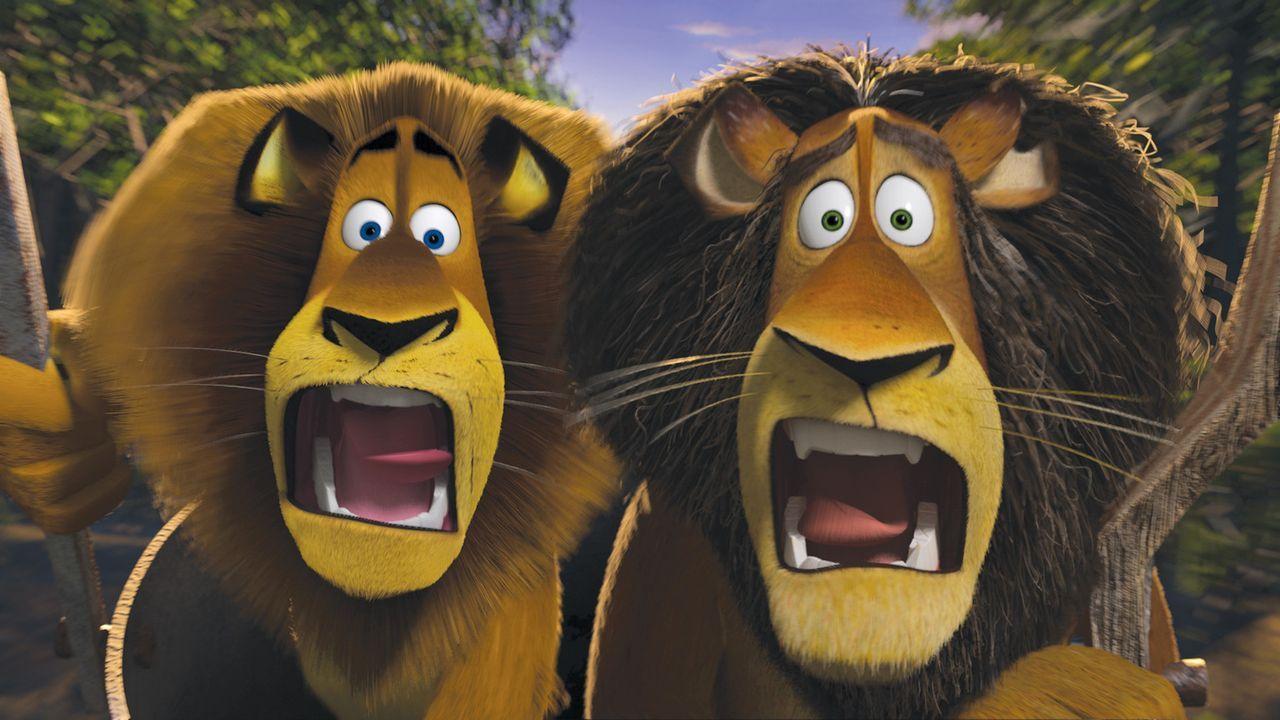 Alex (l.) wollte eigentlich nur nach Hause in seinen Zoo, doch er landet in Afrika. Und dort bleibt ihm der Mund offen stehen ... - Bildquelle: (2008) DREAMWORKS ANIMATION LLC. ALL RIGHTS RESERVED.