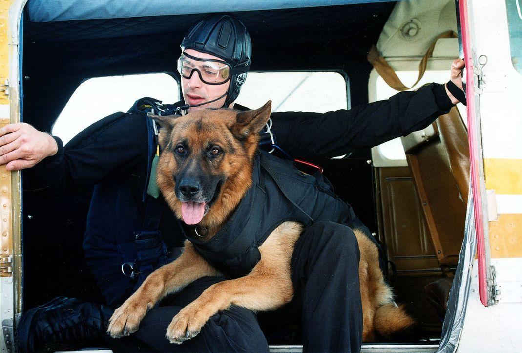 Kommissar Brandtner (Gedeon Burkhard) und Rex starten mit dem Flugzeug zur Verfolgung der Mafiosi. - Bildquelle: Ali Schafler Sat.1
