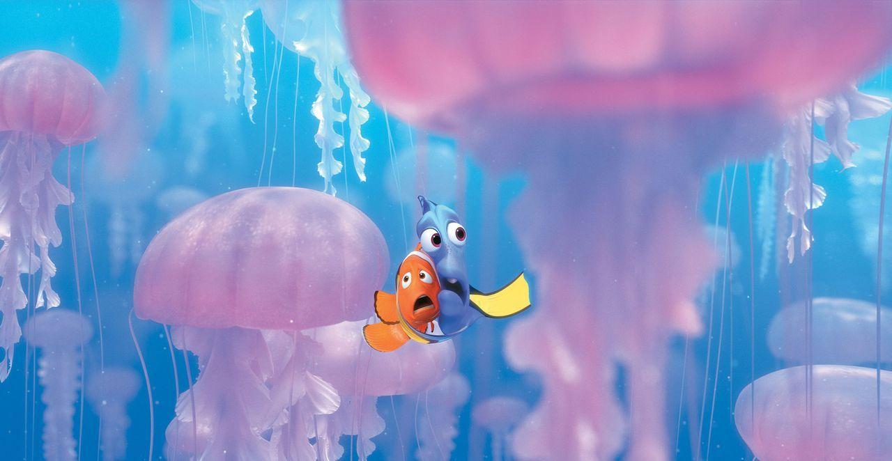 Plötzlich finden sich Marlin (l.) und Dorie (r.) inmitten giftiger Quallen wieder ? - Bildquelle: Walt Disney Pictures