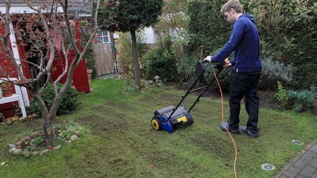 Radikal, aber nützlich: Mit einem Vertikutierer können Sie Klee im Rasen zuve...