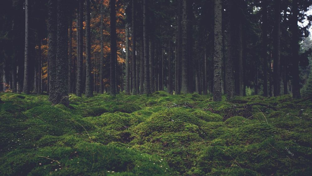 Häufig Bäume schneiden: Alles über das Wie und Wann - SAT.1 Ratgeber PM09