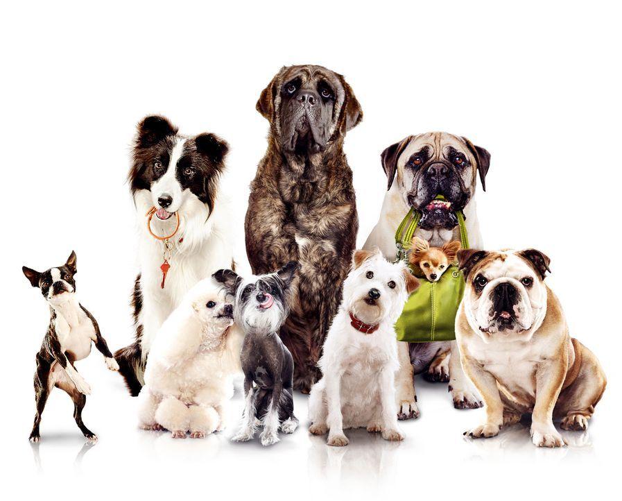 Das Hundehotel - Artwork - Bildquelle: MMVIII MavroCine Pictures GmbH & Co. KG All Rights Reserved.