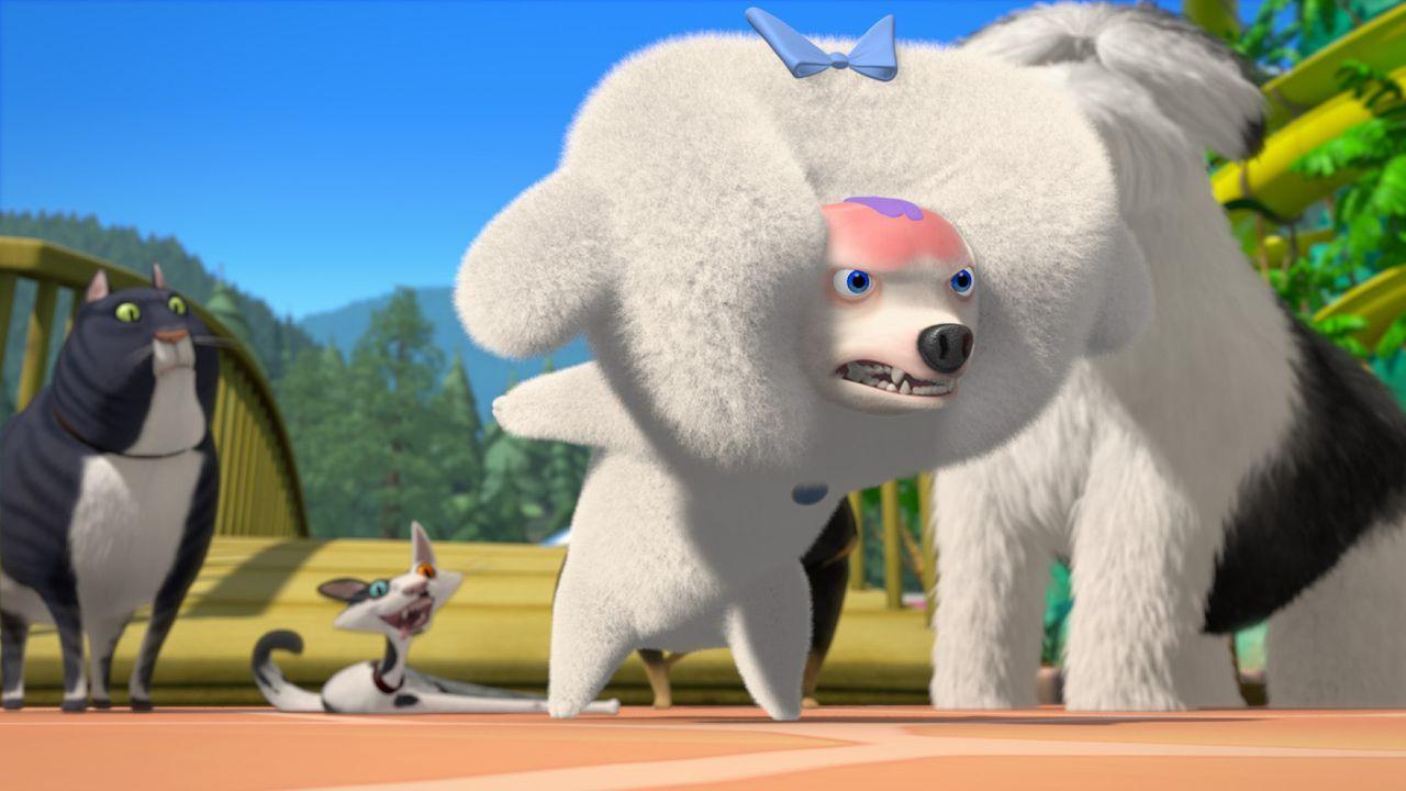 Der Pudel Fifi (M.) warnt Stanley (l.), Rodger (2.v.l.) und die anderen Haustiere vor den äußerst gefährlichen Tieren der Wildnis! - Bildquelle: 2008 Sony Pictures Animation Inc. All Rights Reserved.
