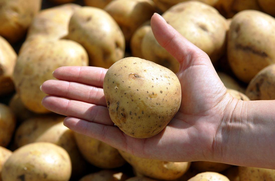kartoffeln-dpa - Bildquelle: dpa